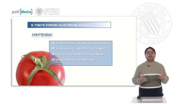 El tomate: especies silvestres relacionadas