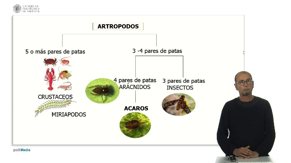 Principales grupos de artrópodos fitófagos