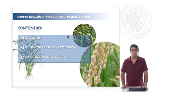 Domesticación de las especies cultivadas: el arroz