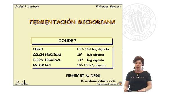 Fermentación microbiana