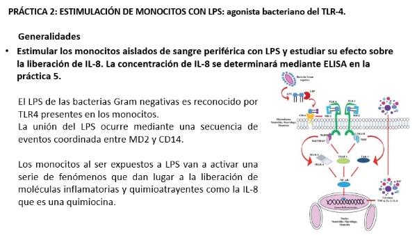 Estimulación de monocitos con LPS