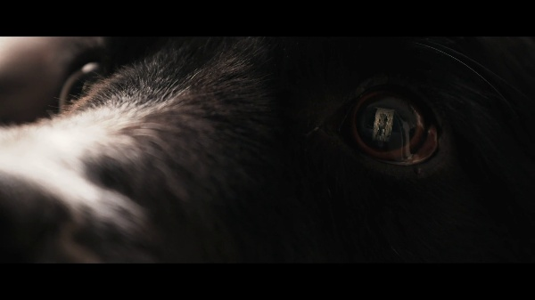 O-City Kranj Oficial Video