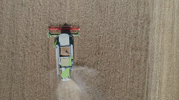 Cosechado de cereales de invierno