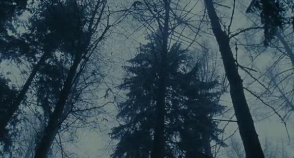 incongruenza_congruente_foresta