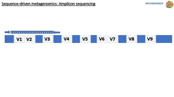 METAGENOMICA AMPLICONES