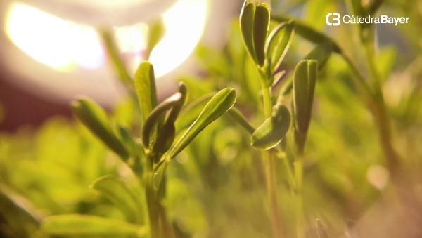 Edición Genética Plantas