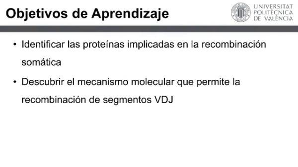 Recombinación VDJ (screen)