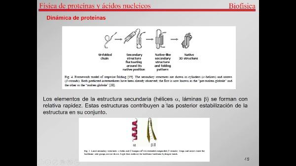 7.-Proteínas T44-T49-Levinthal y plegamiento de proteínas