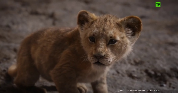 Trailer - El rey león