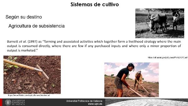 Sistemas de cultivo y rendimiento