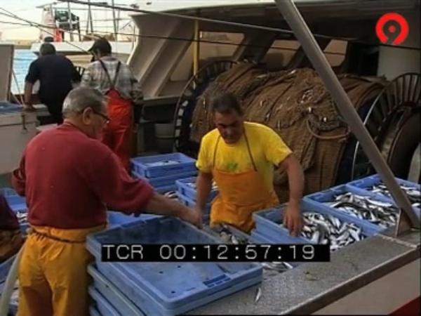 El llagostí - Notícia Canal9