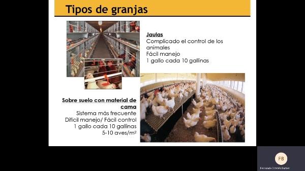 Producción de huevos 2