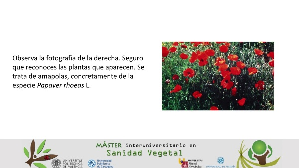 Polimedia Tema 12 Asig. 3 Master Interuniv. Sanidad Vegetal