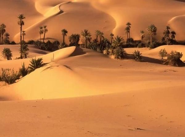 tarea 6-desierto