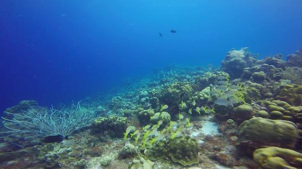 Arrecifes de coral: el cardumen