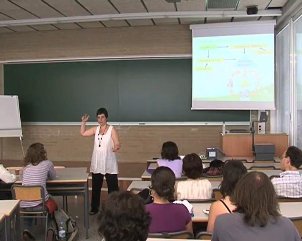 Angels Catalá - Gestión de Proyecto - Diagnóstico, Diseño y Formulación (parte 2 de 4)