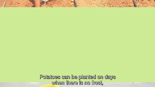 School Gardens: Planting and Sowing