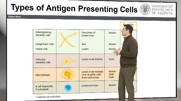 Células Presentadoras de Antígeno