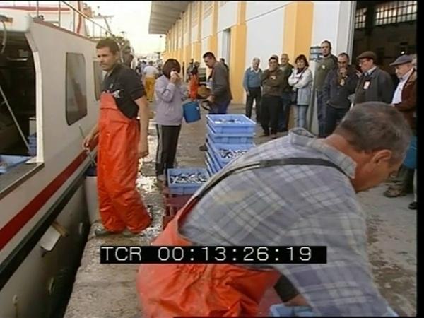 El llangostí - Notícia Canal9