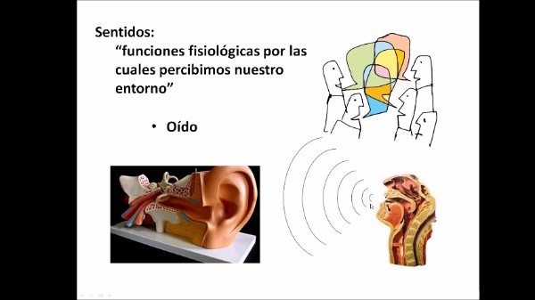 Práctica acústica. Frecuencias audibles y emisión de voz