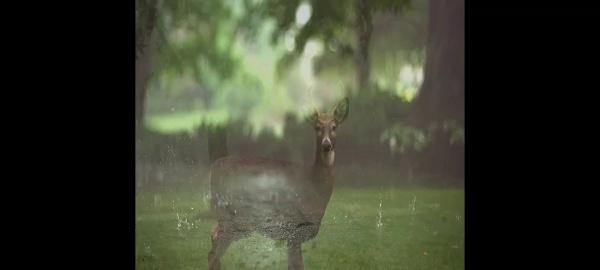 jackson y la lluvia