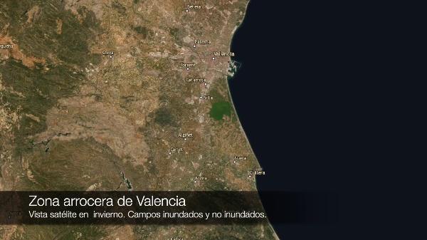 Cultivo de arroz en Valencia