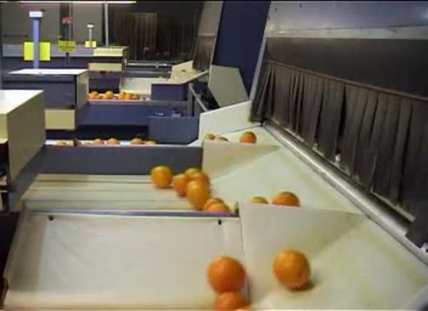 Sistema de visión artificial para la optimización del encerado de la fruta en el tratamiento post-cosecha