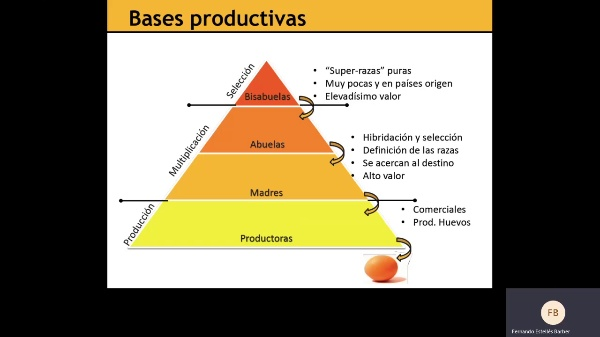 Bases productivas aves 3