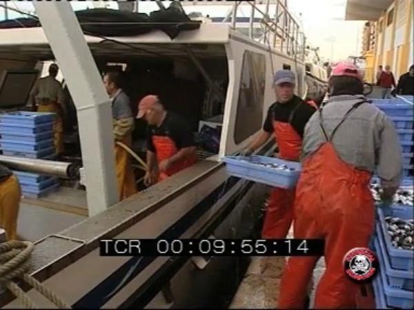 El llagosti - Noticia Canal 9