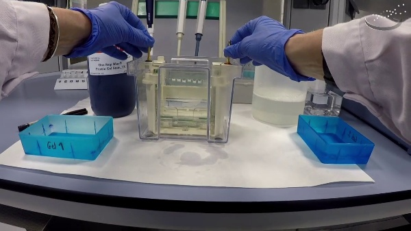 Disassembly of electrophoresis in polyacrylamide gel and gel staining