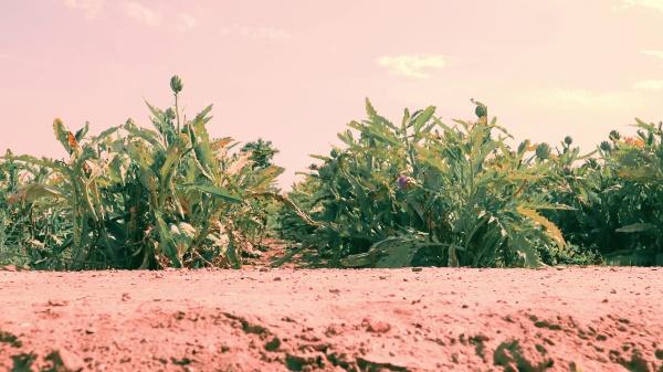 Video de presentación del Mercat Agroecològic i de Comerç¿Just