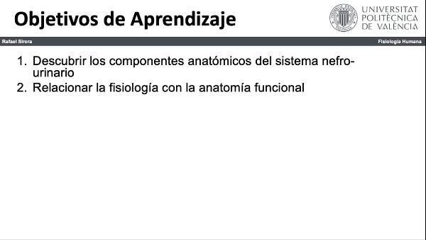 Componentes sistema urinario