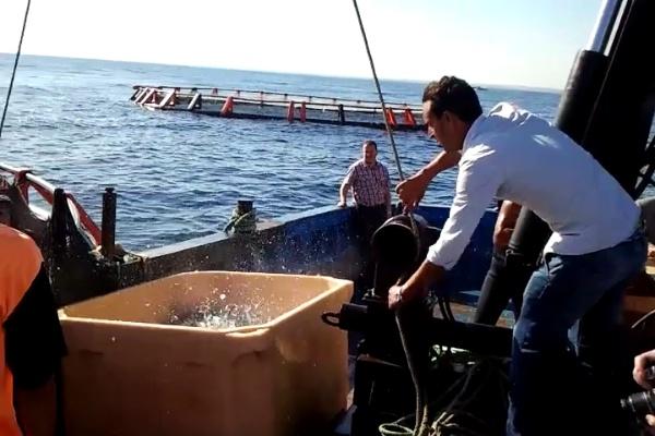 Pesca en jaulas en tunez