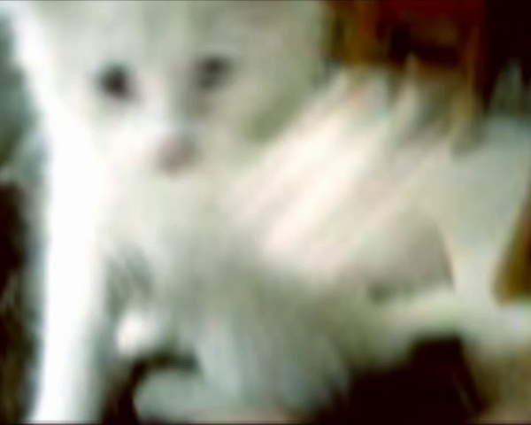 videocarta 08
