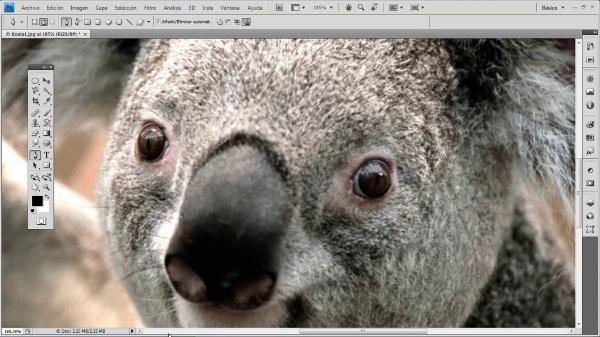 Photoshop CS4. Mano