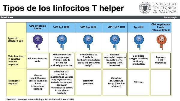 Subpoblaciones linfocitarias